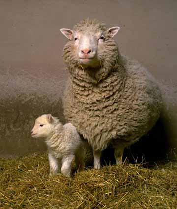 Доли и Бони, клонираните овци